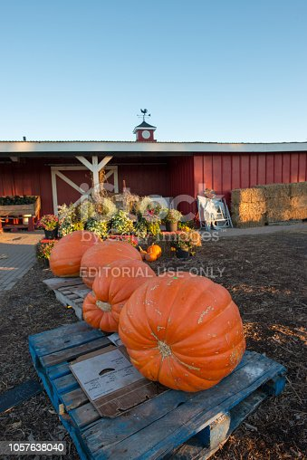 Markham, ON, Canada - Oct 20, 2018:  harvested pumpkins in front of a farm house for sale.