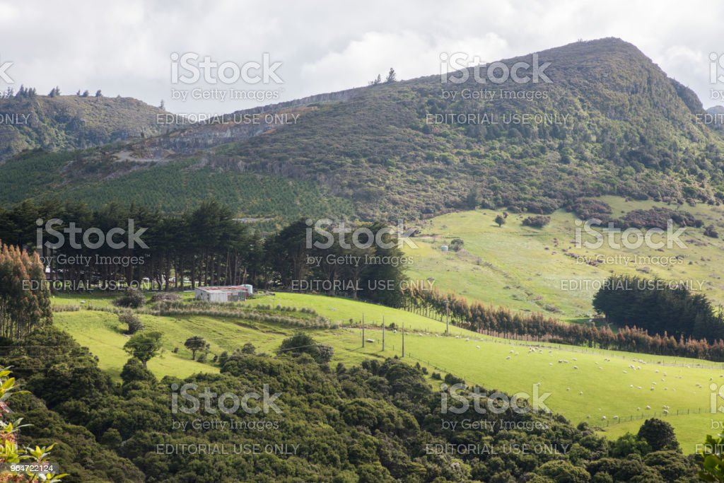Farmland in Dunedin royalty-free stock photo
