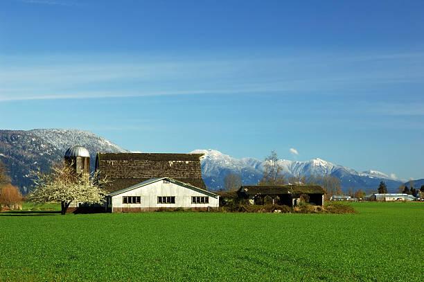 farmland in Fraser Valley stock photo