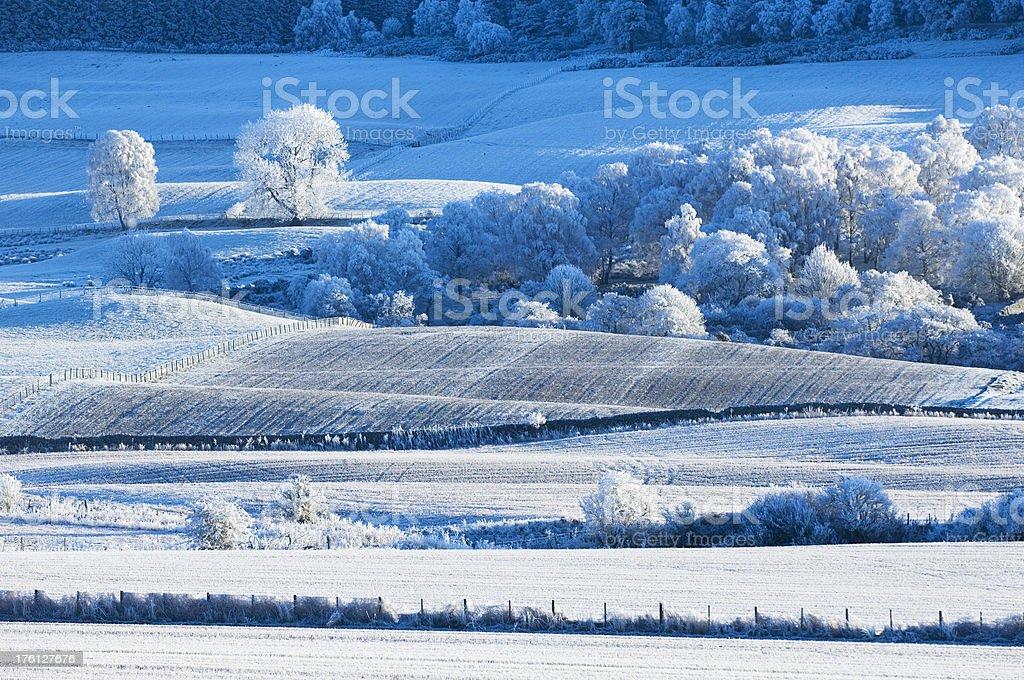 Farmland in heavy frost royalty-free stock photo