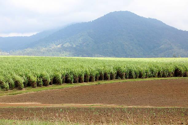 Farmland in Queensland stock photo