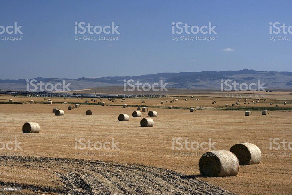 Farmland landscape royalty-free stock photo
