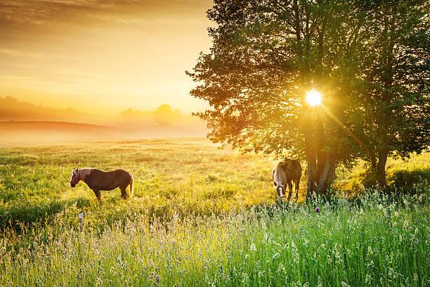 Farmland landscape spring meadow during foggy sunset picture id470874185?b=1&k=6&m=470874185&s=612x612&w=0&h=gccfreiebtoxqkqkyfwldkbbfntlr88kc8tb wxdr4w=