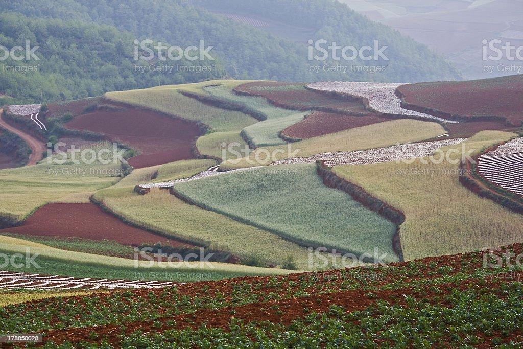 Farmland royalty-free stock photo