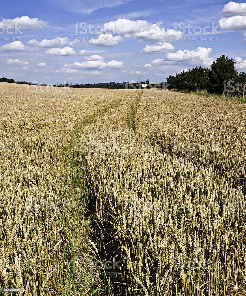 Сельский Стоковые фото Стоковая фотография