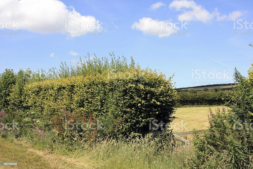Farmland foto stock royalty-free
