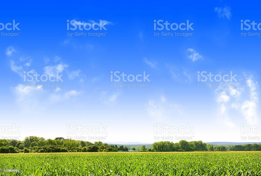 Farmland - SUPER HIGH RES (16mp) royalty-free stock photo