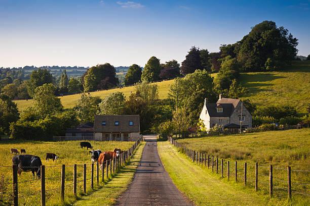 Terreno agricolo con fattoria e mucche al pascolo nel Regno Unito - foto stock