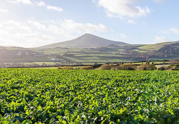Farmland with Mountain stock photo