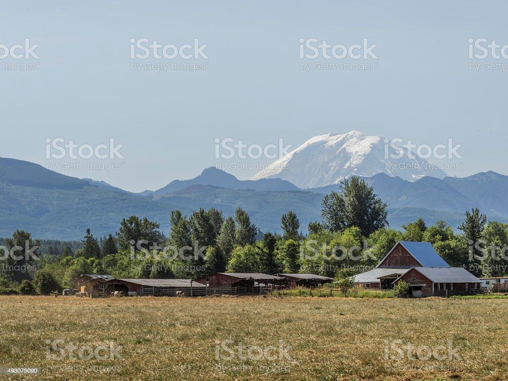 farmland with MT.Rainier background stock photo