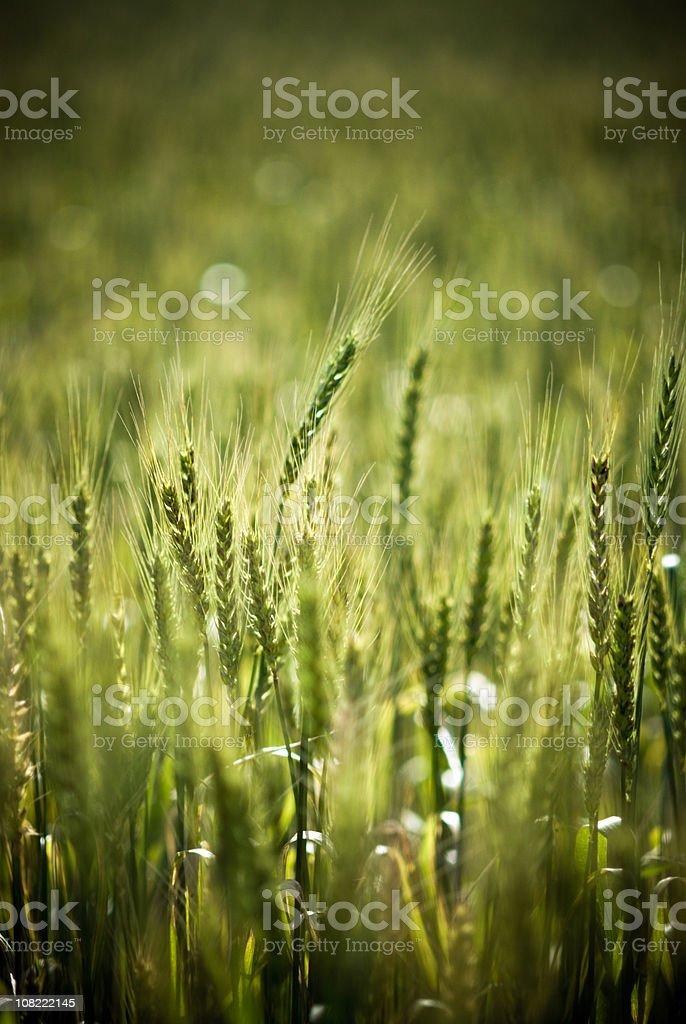 Farmlands royalty-free stock photo