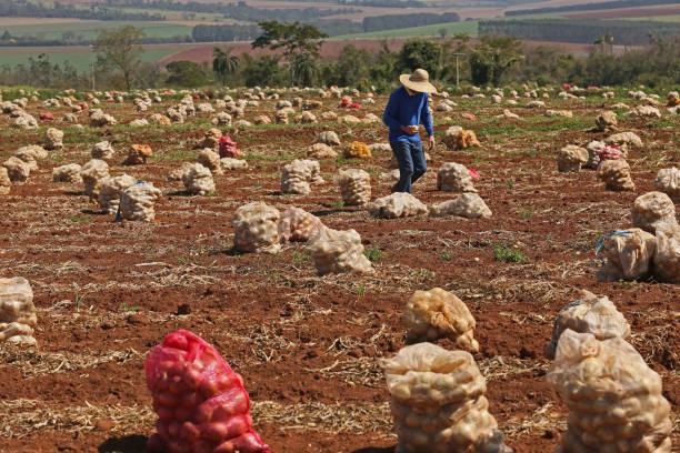 betriebe und branchen, die agrarindustrie zu produzieren - messias stock-fotos und bilder