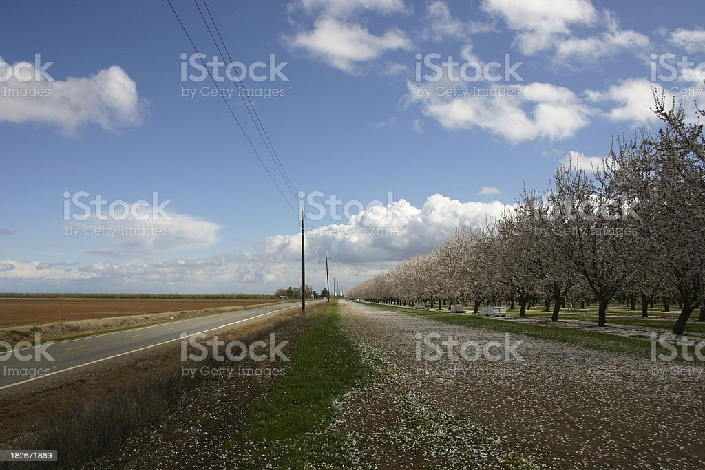 Farms & Orchards royalty-free stock photo