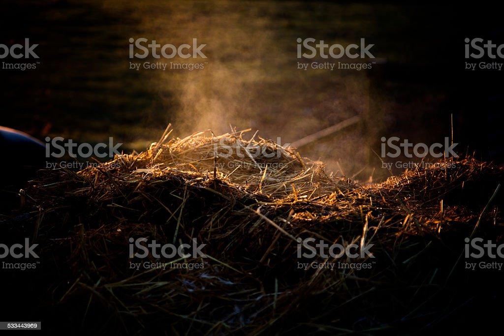 Farmyard muck heap stock photo