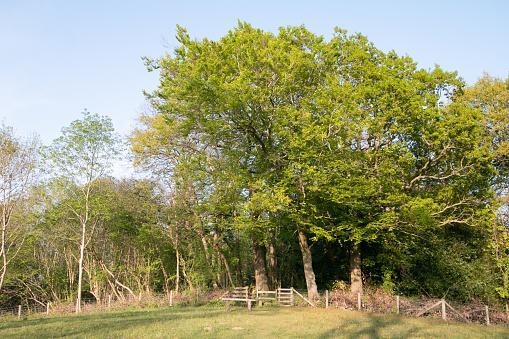 Farningham Wood in Kent, England