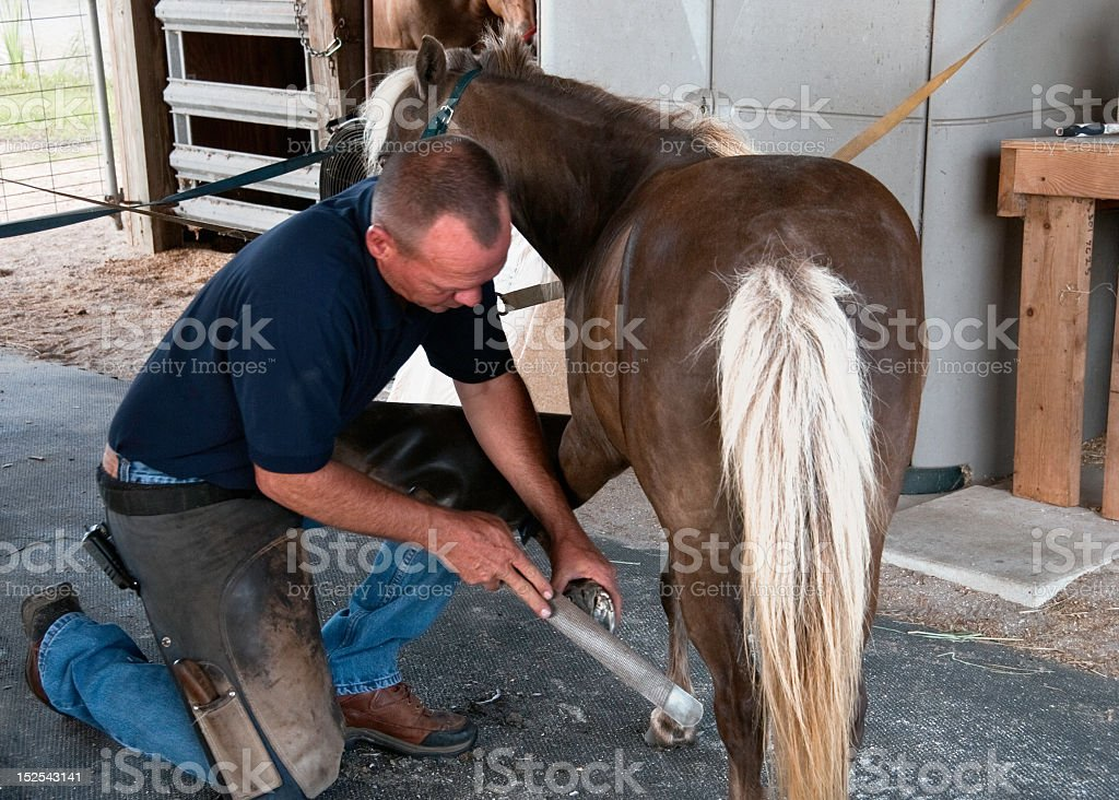 Farrier at work royalty-free stock photo