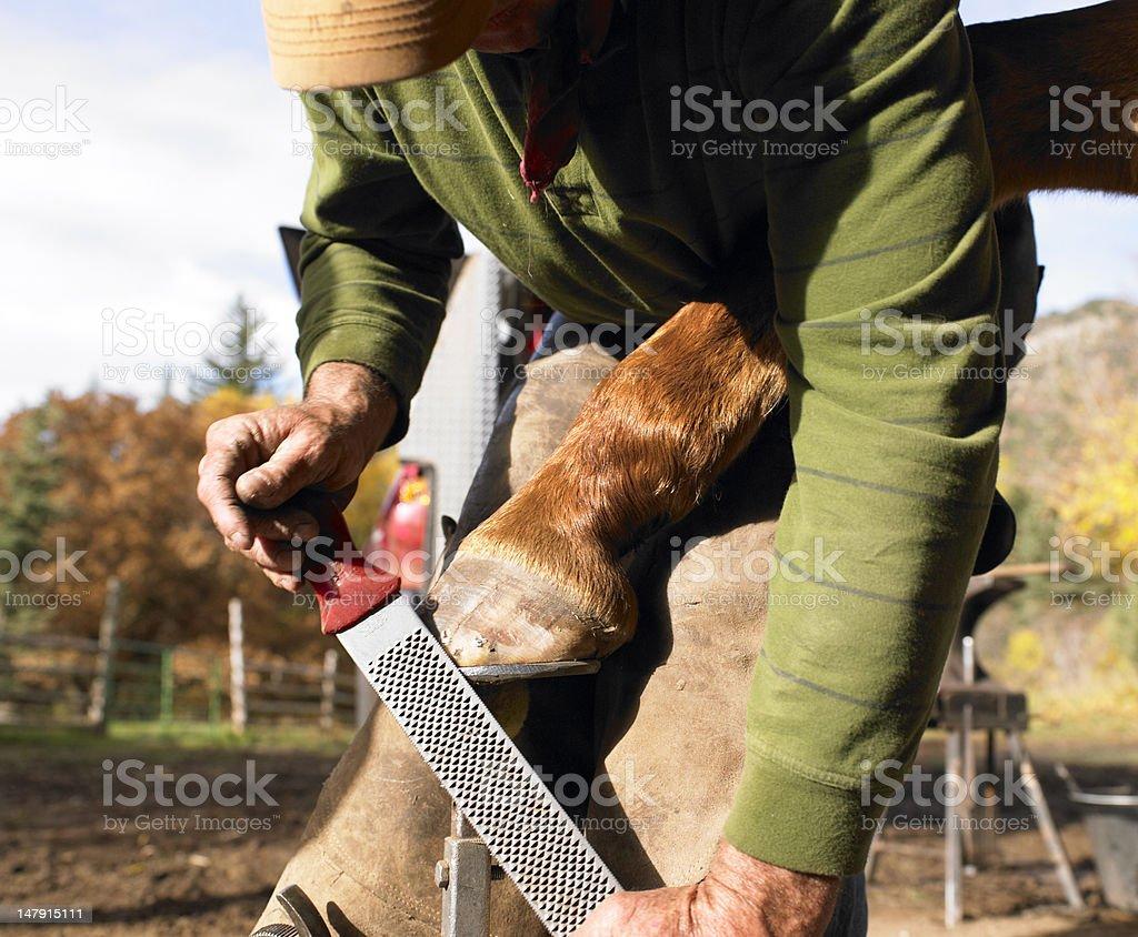 Farrier Filing Horse Hoof stock photo