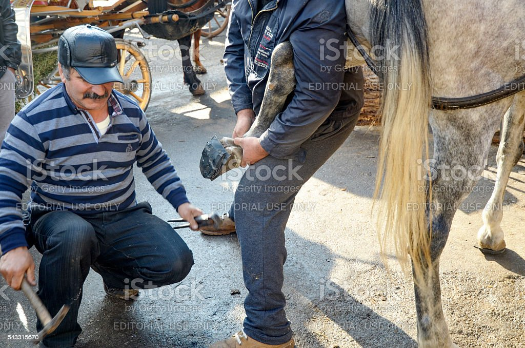 d18202d0 Farrier Horses Hoof Nailing On Shoes Stock Photo & More Pictures of ...