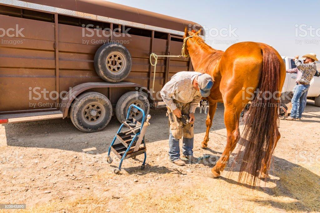 Farrier Shoeing Horses stock photo