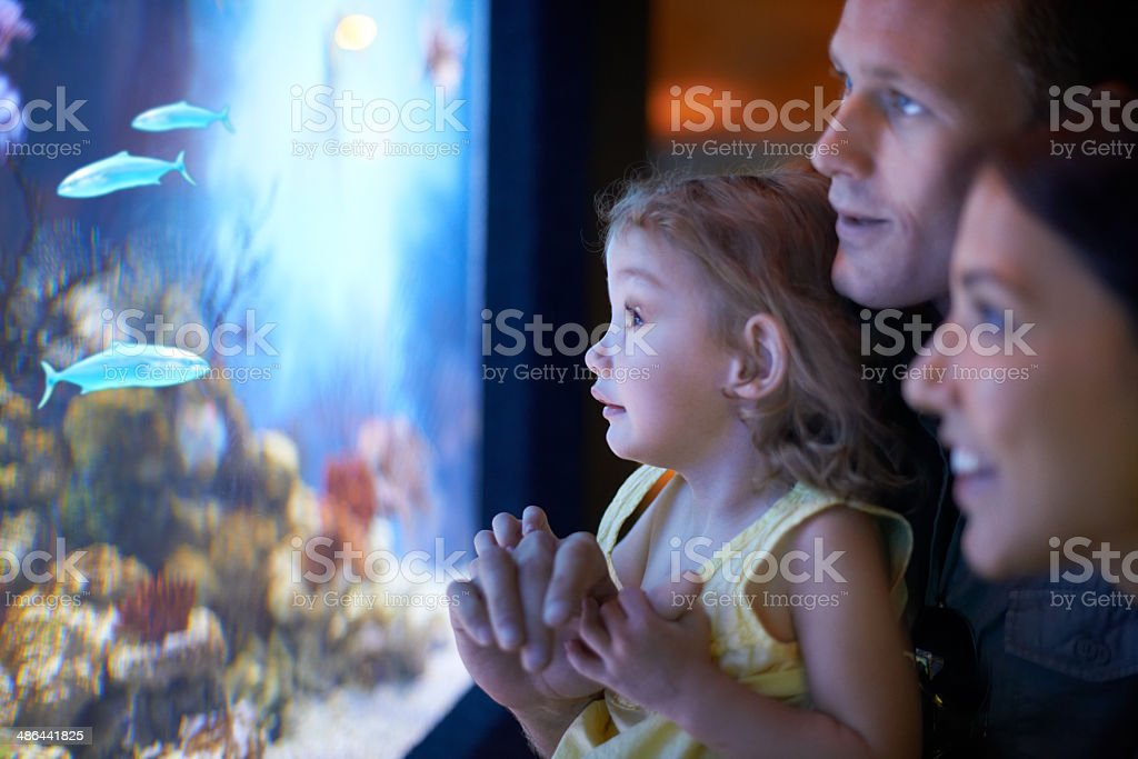 Fascinated by the fish stock photo