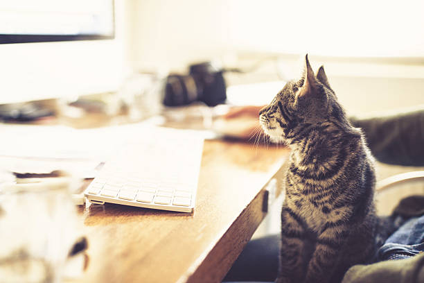 Fascinated little kitten staring at the monitor picture id480147866?b=1&k=6&m=480147866&s=612x612&w=0&h=rb8ebmtmjqr6afzztkegkfxenkexiightjtnnsafmxi=
