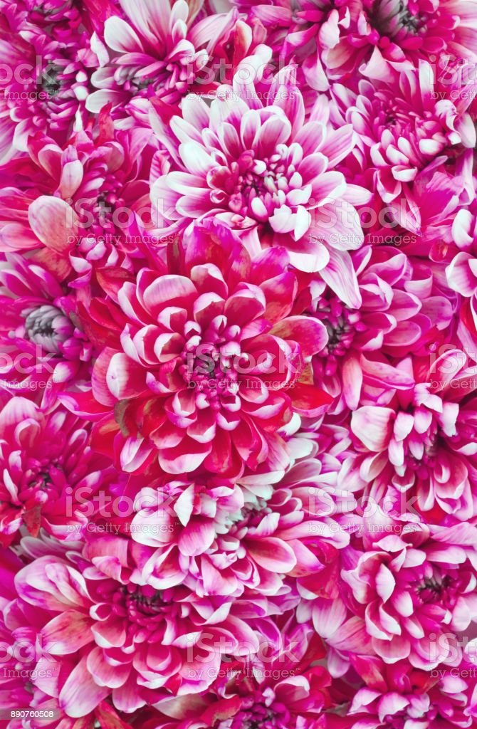 Fashion background with many pink flowers stock photo