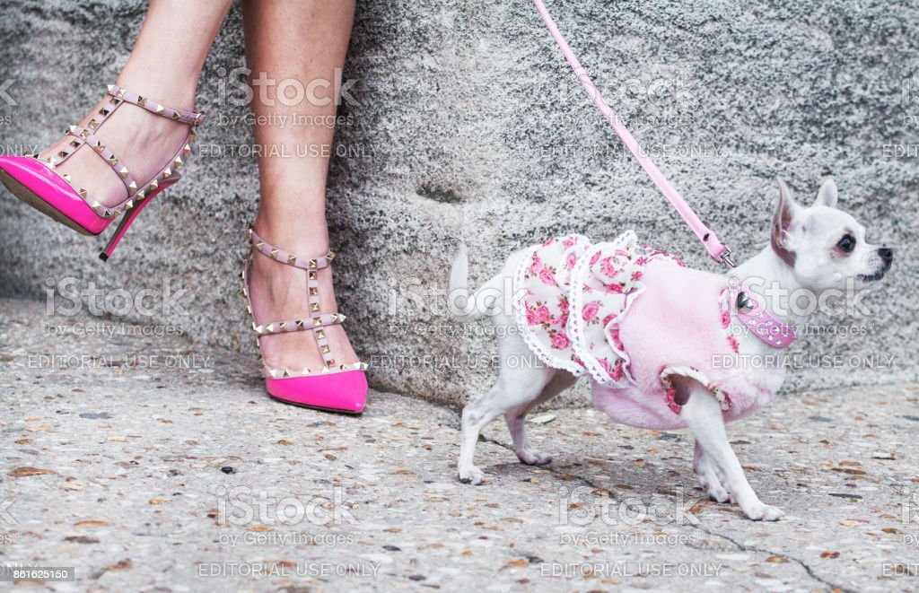 Fashion girls on the walk with chihuahua stock photo