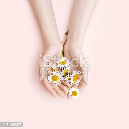 946930880istockphoto Fashion hand art chamomile natural cosmetics women, white beautiful chamomile flowers hand with bright contrast makeup, hand care. Creative beauty photo girl sitting at table, contrasting background 1132199077