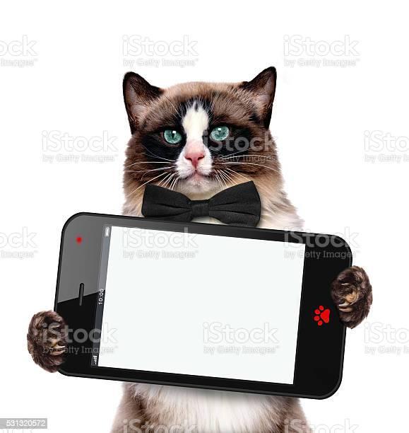 Fashionable cat holding a blank cell phohe picture id531320572?b=1&k=6&m=531320572&s=612x612&h=xhrmuhvydt1h7hzqqwksgjmbzgibvojytik2wxkz2zs=