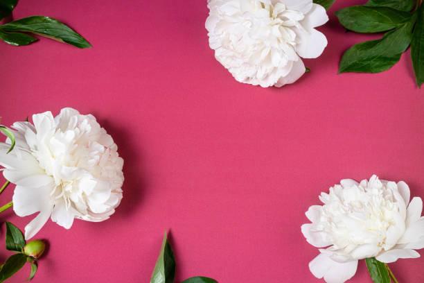 Fashionable flowering background beautiful white peony flowers on picture id1180383324?b=1&k=6&m=1180383324&s=612x612&w=0&h=ttv atpaqkf1fkxexgg 190q8fnfcjb2qwwroffc po=