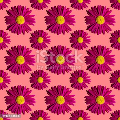 istock Fashionable summer floral pattern. Bright pink daisies on a pink background with hard shadows, flat lay, top view, seamless texture. Minimalistic background in style pop art. Fabric and card ideas 1263908030