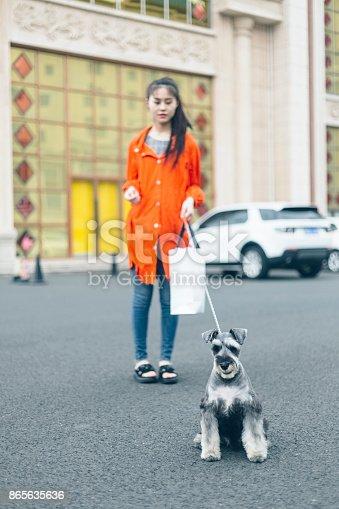istock fashionable woman walking dog at urban street 865635636