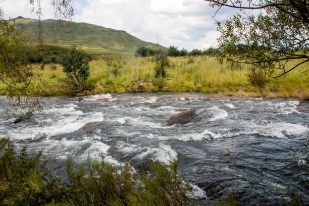 Schneller Fluss, der von natürlicher Vegetation umgeben ist – Foto