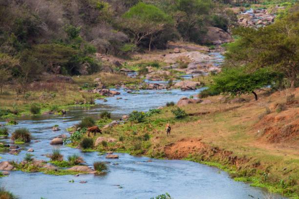 Schnell fließender Umgeni-Fluss – Foto