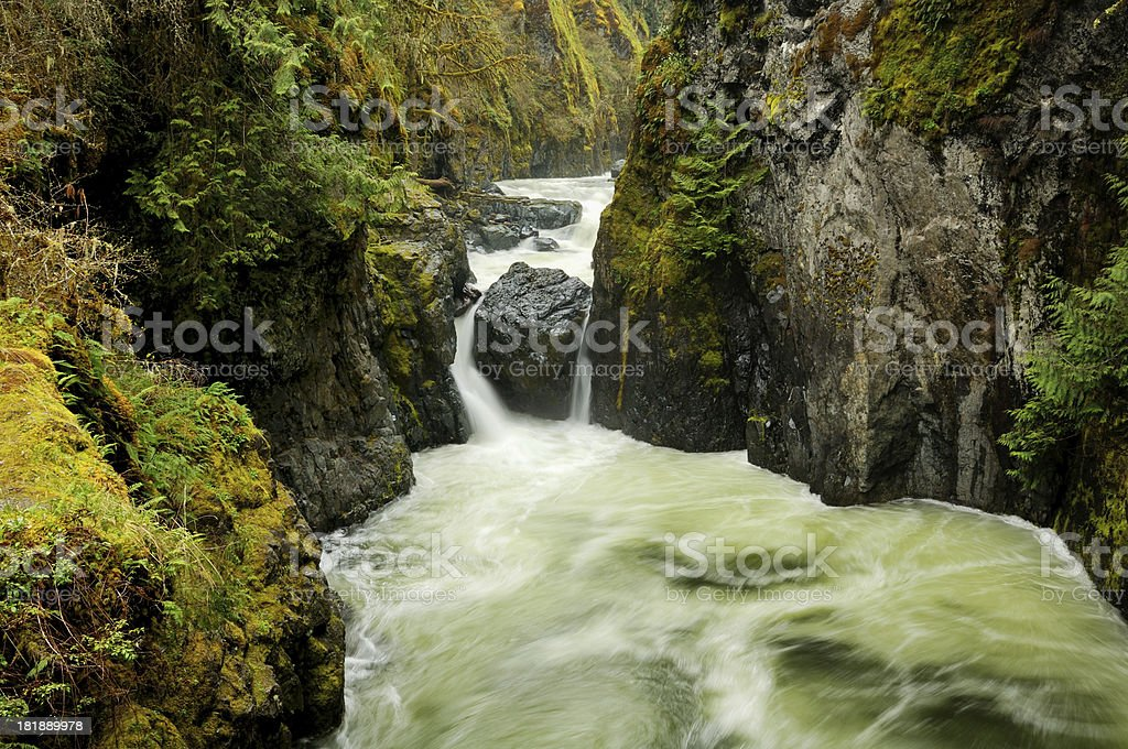 Fast mountain stream in Vancouver Island, Canada royalty-free stock photo