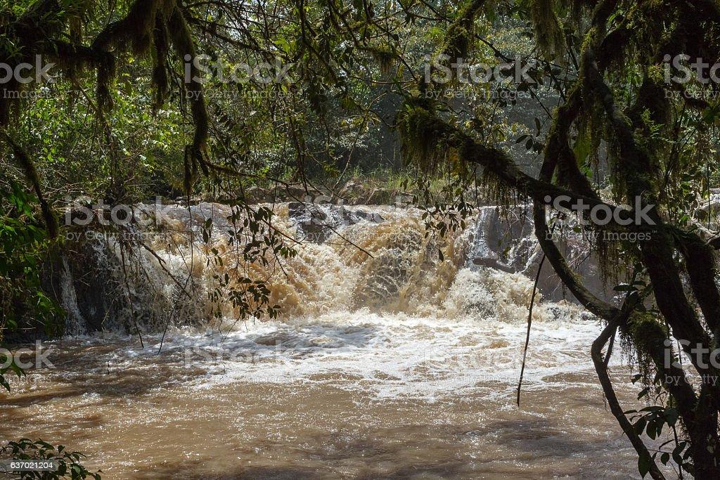 Fast river in Kakamega Forest. Kenya, Africa stock photo