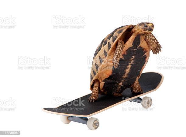Fast tortoise picture id177235982?b=1&k=6&m=177235982&s=612x612&h=my0xlpb6whcxkw 2kbjmq4qnn1quq5osv5elbkpj108=