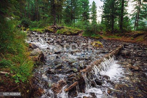 istock Fast water stream in wild mountain creek in terrain of Shavlinsky Lakes in Altai. Green forest landscape. Rich vegetation near brook. Small waterfall. 1021403534
