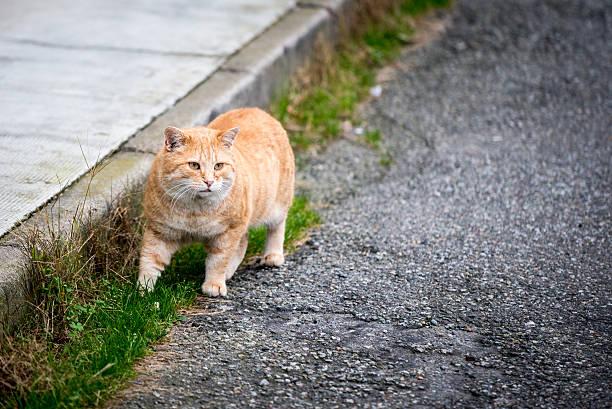 Fat cat picture id450329921?b=1&k=6&m=450329921&s=612x612&w=0&h=yeevl ehrplz0weve7xlgqrdgnepllgwraackstccsw=