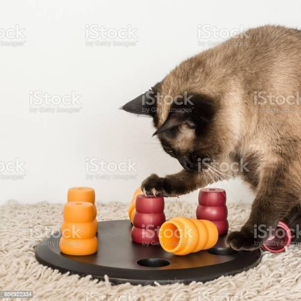 Fat cat solving pet puzzle picture id656922334?b=1&k=6&m=656922334&s=612x612&h=aix8ajpnqpbnp3sfvzqxqvoidt0zalujikqwuazwcfs=