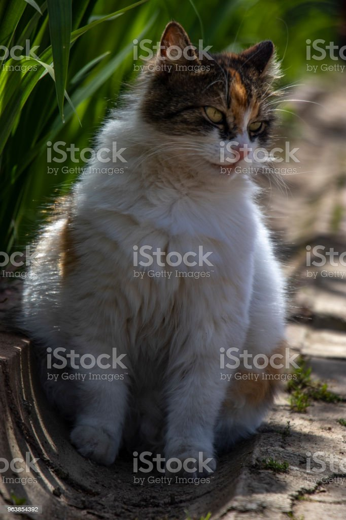Fat cute cat in nature - Royalty-free Animal Stock Photo