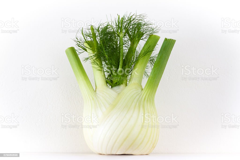 Fat Proud Fennel Bulb Standing, White background (Close-Up) stock photo
