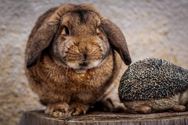 dicke kaninchen rest - plüschhase stock-fotos und bilder