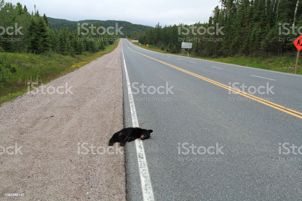 Fatal animal accident on the highway stock photo