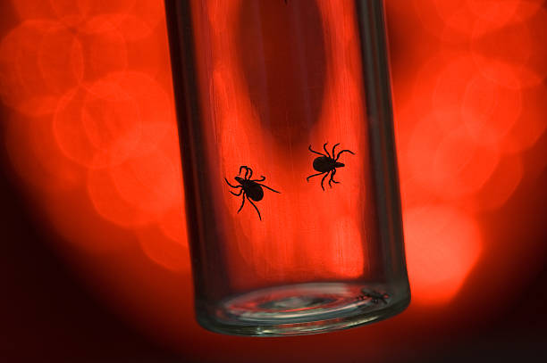 Fatally dangerous ticks are arachnids on a red background stock photo