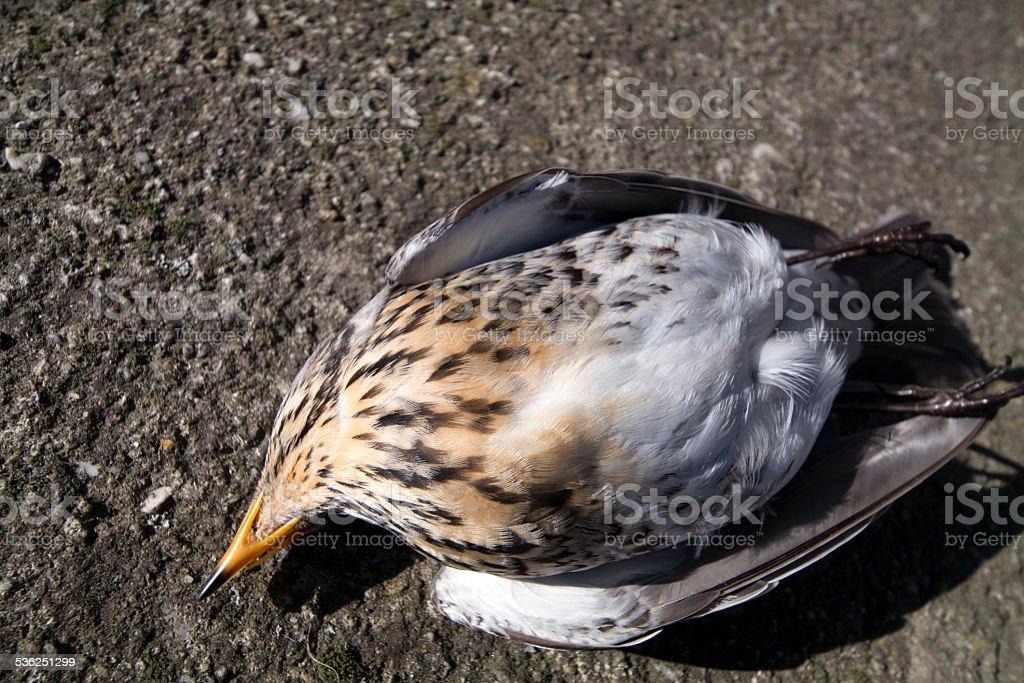 Fatally injured bird stock photo