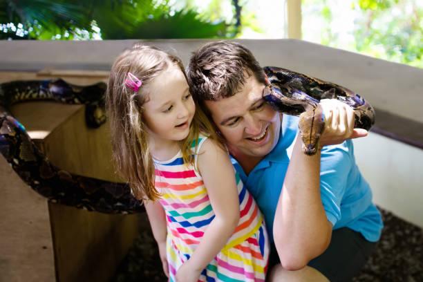 père et enfant cale et serpent python alimentation au zoo - animaux familiers exotiques photos et images de collection