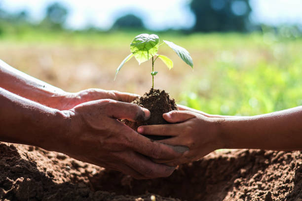 father and children help plant trees to help reduce global warming. stock photo