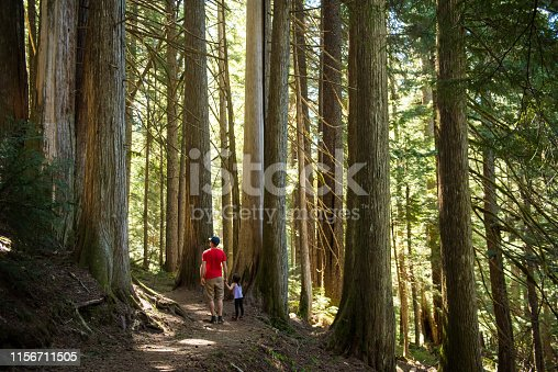 Father and daughter walking in a cedar forest. Family is hiking in temperate rainforest. They are enjoying vacation together.