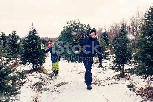 istock Father and daughter carrying freshly cut Christmas tree outdoors winter. 629799708